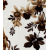Lilium Beige-Brown